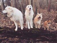 Trusted Dog Walks & Day Care in Brighton & Hove