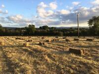 Good quality Hay bales