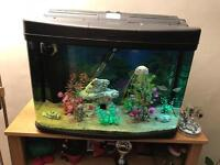 Medium sized tropic fish tank setup