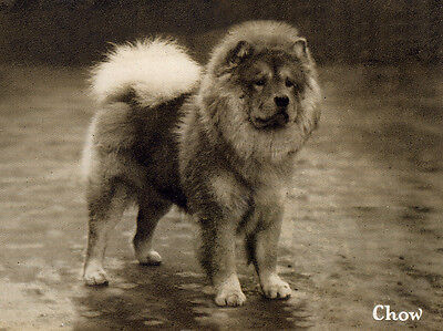 CHOW CHOW CHARMING DOG GREETINGS NOTE CARD BEAUTIFUL STANDING DOG SEPIA CARD