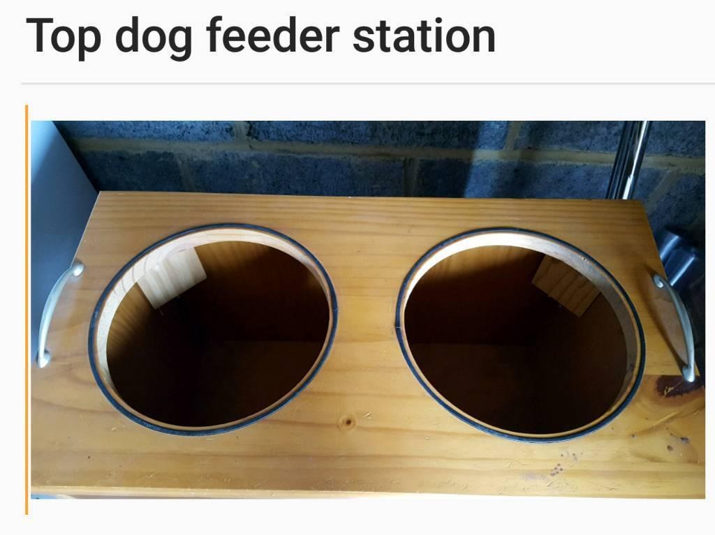 Dog Pet assessory