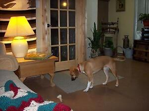 D's Country Pet Resort    A hotel for dogs and cats Cornwall Ontario image 2