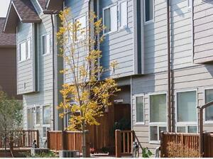 Spacious Five Bedroom Townhouse Near University  of Manitoba