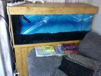 tropical fishtank full setup