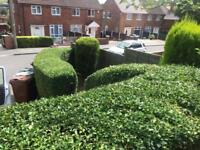 K.J.J.M garden maintenance. grass cut, hedges cut, fencing, weeding,turfing, landscaping and paving