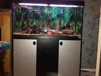 Complete 4ft fish tank