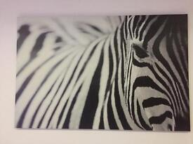 Zebra Canvas Picture