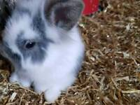 5 bunnies needing homes