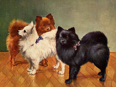 POMERANIAN SPITZ CHARMING DOG GREETINGS NOTE CARD THREE BEAUTIFUL DOGS