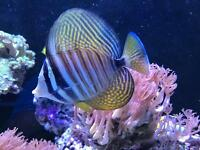 Marine live rocks, corals, and fishes for sale fish tank aquarium reef