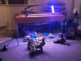 140l tank with hood, filter, lights, pump and accessories