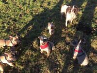 Raise The Woof - Dog walking, Day Care and Home Boarding
