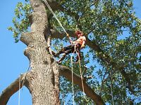 Certified Arborist or Certified Tree Worker