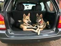 German shepherd husky pups