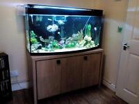 Juwel bow front fish tank