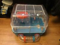 2 female mice and cage