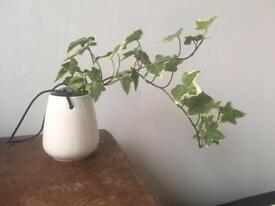 Ceramic Hanging Plant Pots x 15 (Wedding Favours)