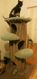 'Funky Cats' GIANT Hollow PLUS Shelf, DELUXE Cat Scratch Post!