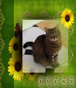 Lovely Lady Lucky Looking for a Forever Home. Carma Moncton.