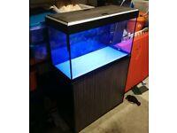 Fluval roma 125 fish tank aquarium