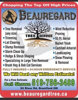 Tree Removal, Storm damage cleanup, stump removal