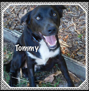 Tommy A SECOND CHANCE ANIMAL RESCUE Deception Bay Caboolture Area Preview