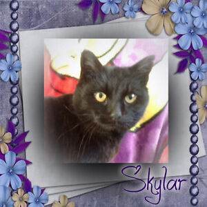 Sweet Lady Skylar is Seeking a Forever Home. Carma Moncton.