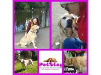 ** PETSTAY - LOOKING FOR DOG LOVERS TO JOIN AN EXPERIENCED TEAM OF DOGS CARERS **
