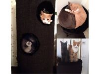 save your sofa,carpet furniture, MODERN all sisal solid cat tower/tree 3ft X 2ft solid-1 piece
