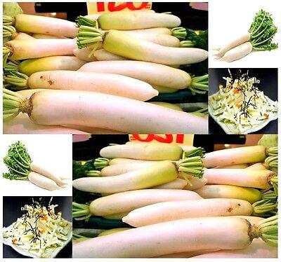 BULK  Daikon Radish Seed Japanese Daikon ...