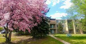 Cambridge House - 1 Bedroom Apartment for Rent