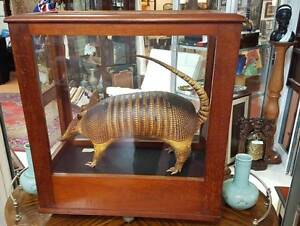 SALE ON - QUIRKY COLLECTABLES & CURIOUSITIES FREMANTLE Fremantle Fremantle Area Preview
