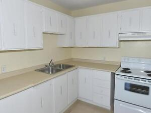 Beautifully Designed 2 Bedroom Suites. One Month Free Kitchener / Waterloo Kitchener Area image 3