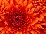 bellas_garden_treasures