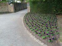 Gardener assistant, to work in one of Surrey's best kept Estate gardens RHS qualification or similar