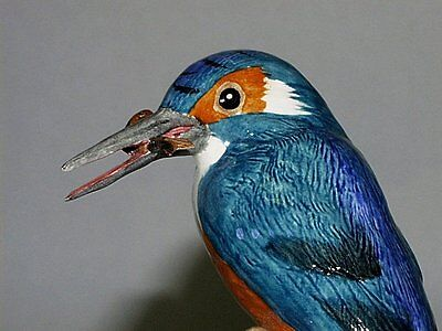 BESWICK - MADE IN ENGLAND - KINGFISHER - LTD.ED.250 - ISSUED 2006