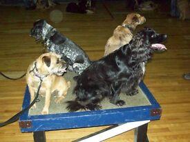 Dog Training Classes, Craigmillar