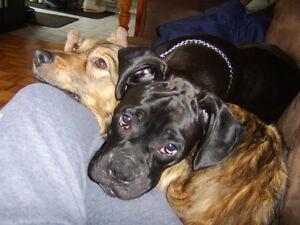 Garderie familliale pour chiens