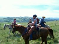 Western Horseback Riding Lessons