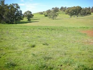 Nestled Amongst the Hills - Your Place -Lots of Space Angaston Barossa Area Preview