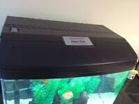 AquaOne 620 90L complete fish tank with 2 x 3 inch Discus fish