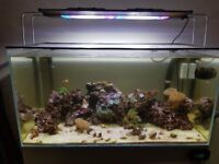 170ltr tank, day/night light, sump amd unit. Over £800 worth of coral and live rock.