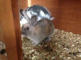 COMPLETE RABBIT SET UP - EXCELLENT CONDITION