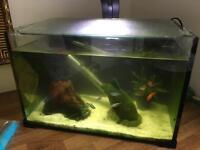 Love Fish fish tank with fish 27L