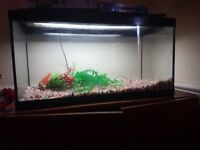 Tropical fish tank 125L