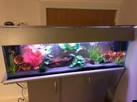 Fish Tank - heater, filter, light and cabinet