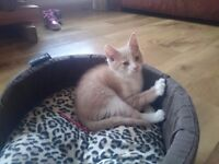 Gorgeous 10 week old kitten with bed, 2 big bags of food & accessories