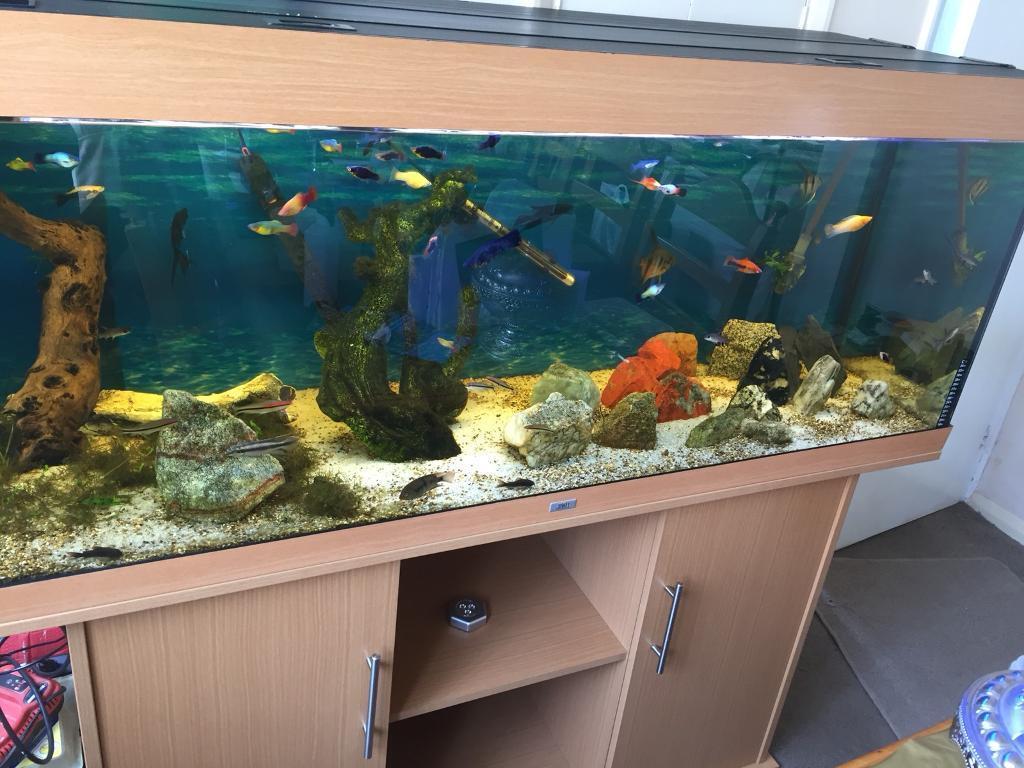 Juwel Rio 400 5ft Aquarium Fish Tank Beech 450l Filter Heater Stand Tropical Malawi
