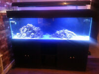 6x2x2 Marine Fish Tank Full Aquarium setup
