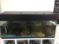 4.5ft x 2ft Tropical Fish Tank With Lights and Filters Complete